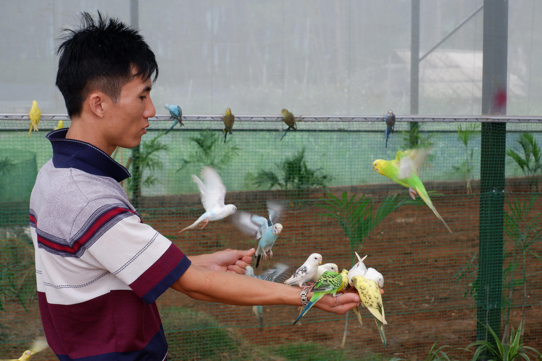 Khu vườn chim của Chimi Farm