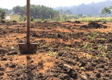 Chuẩn bị đất trồng dâu