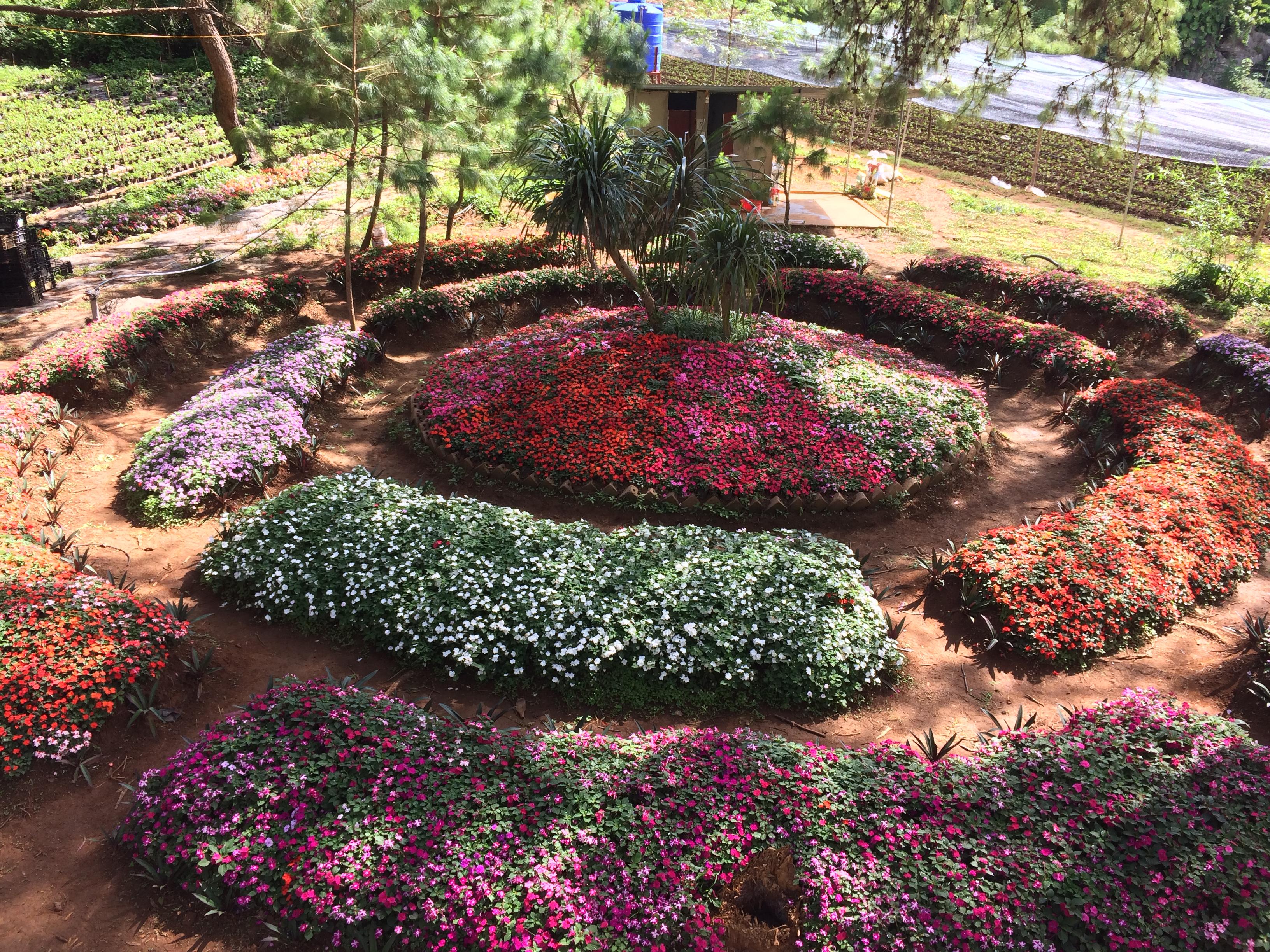 Hoa tại Trang trại dâu tây Chimi Mộc Châu