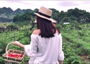 Hái dâu tây tại Chimi Farm Mộc Châu
