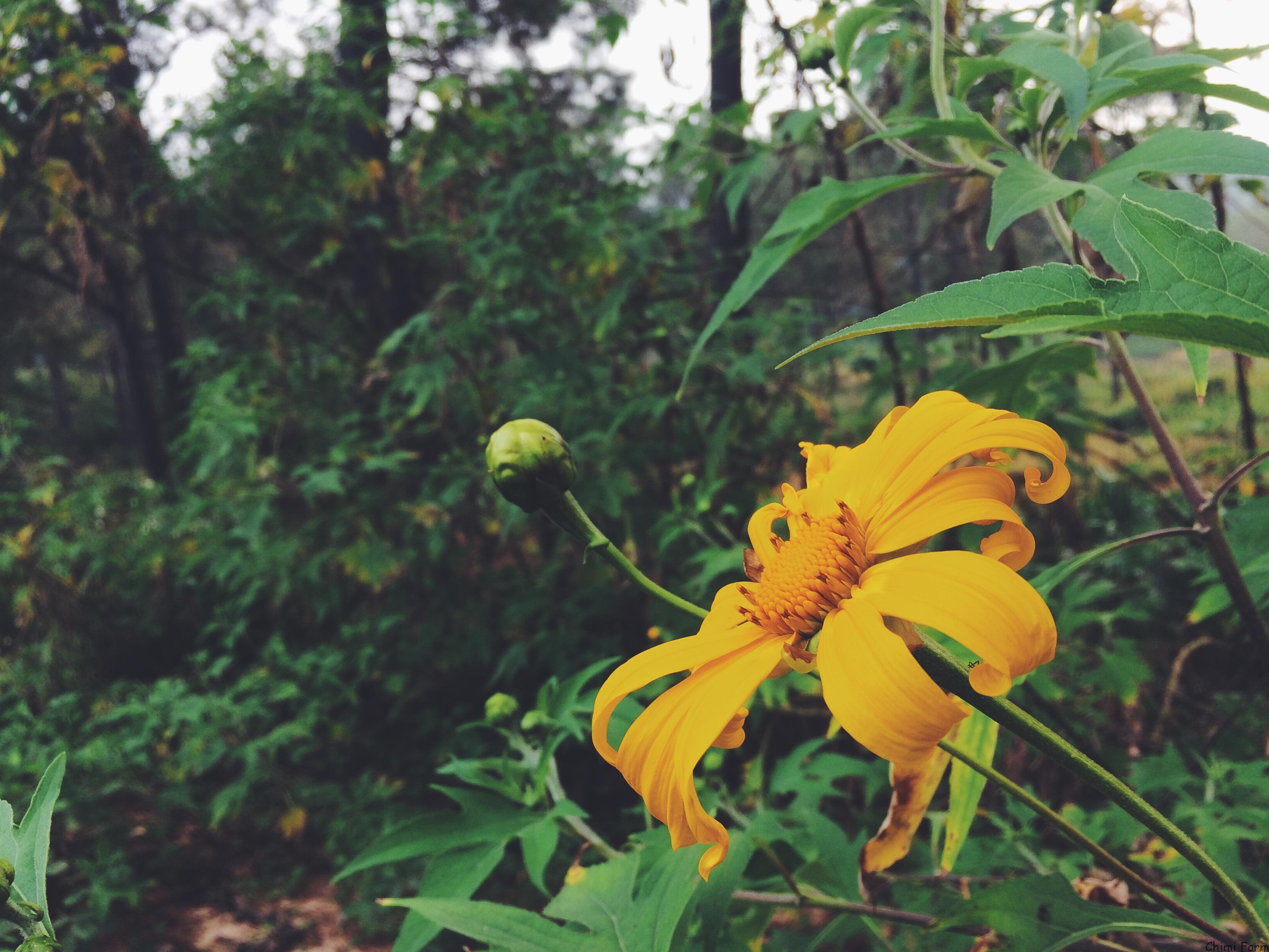 Những bông hoa dại nở rực rỡ