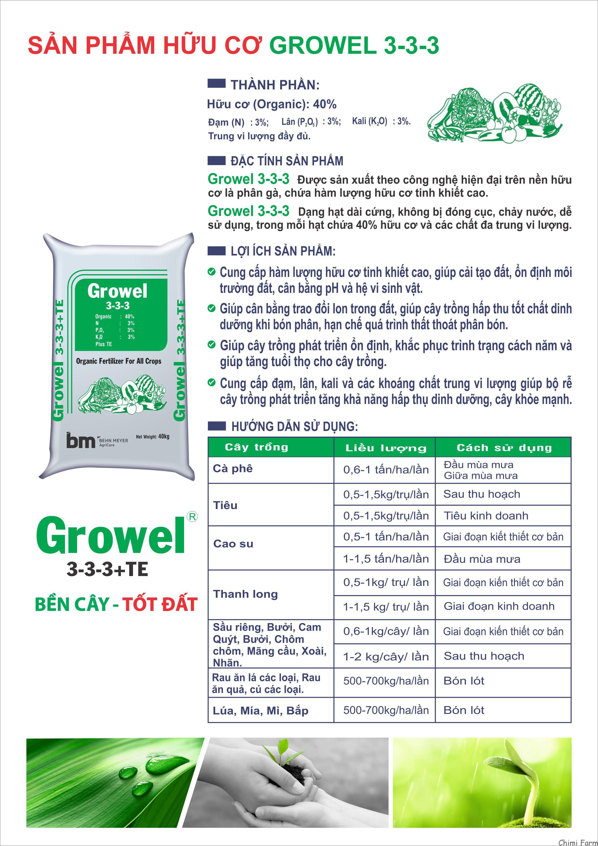 Quy trình trồng, chăm sóc và thu hoạch dâu tây tại Chimi Farm
