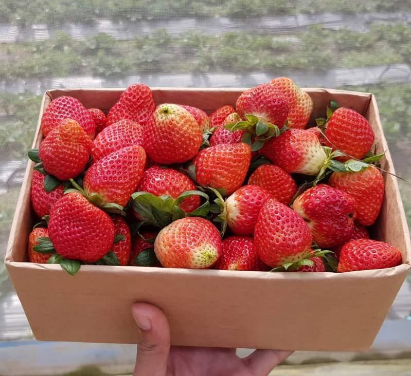 Dâu tây Đà Lạt trên thị trường hoa quả