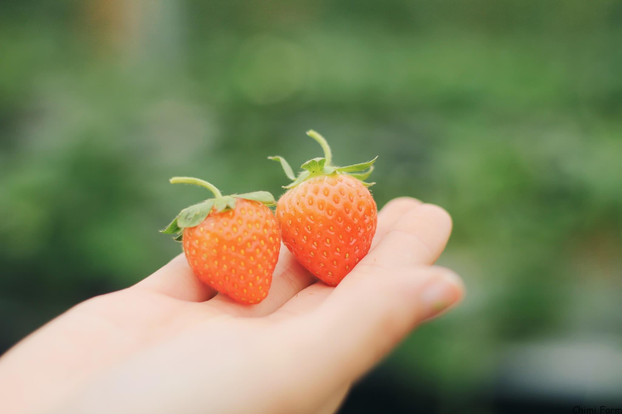 Những trái dâu tây Hàn có hình hơi thon và có màu đỏ cam