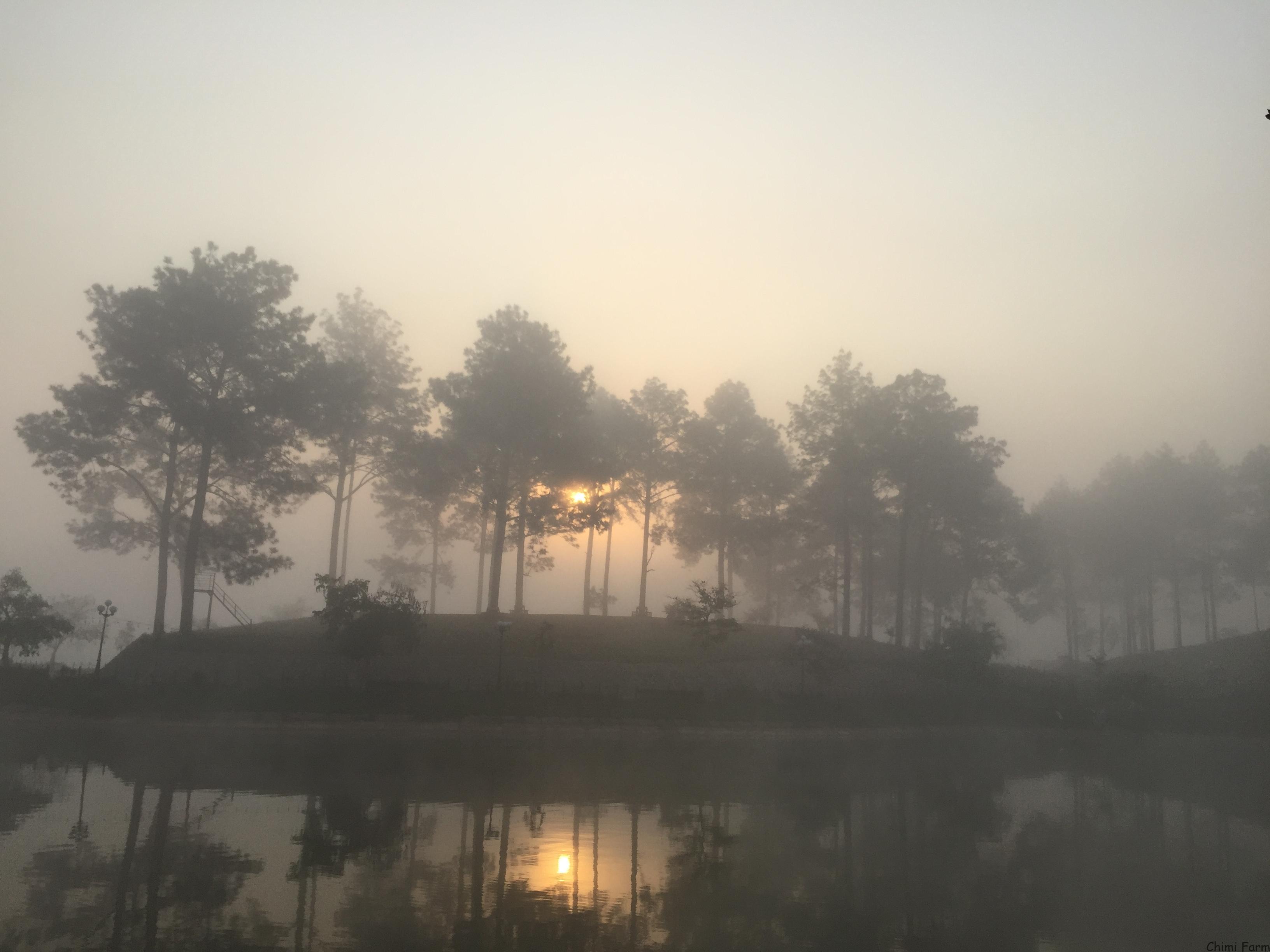 Rừng thông Bản Áng Mộc Châu trong sương mờ