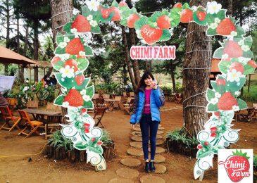 Hái dâu tây Chimi Farm Mộc Châu