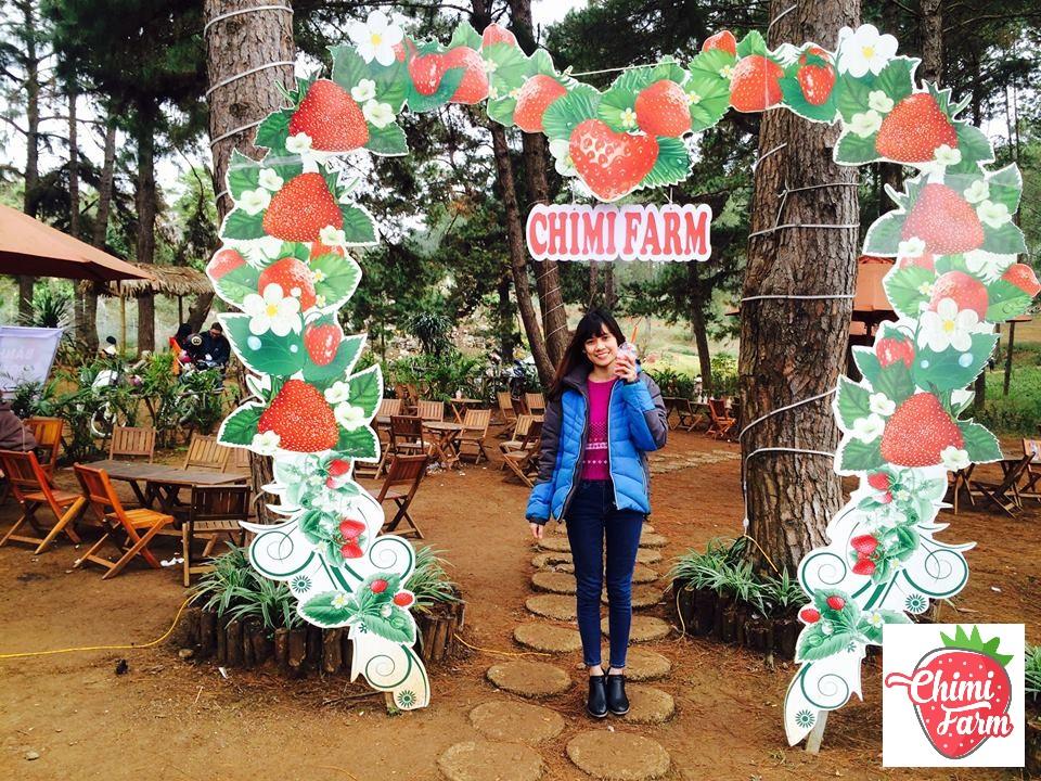 Trang trại dâu tây Chimi tại Bản Áng