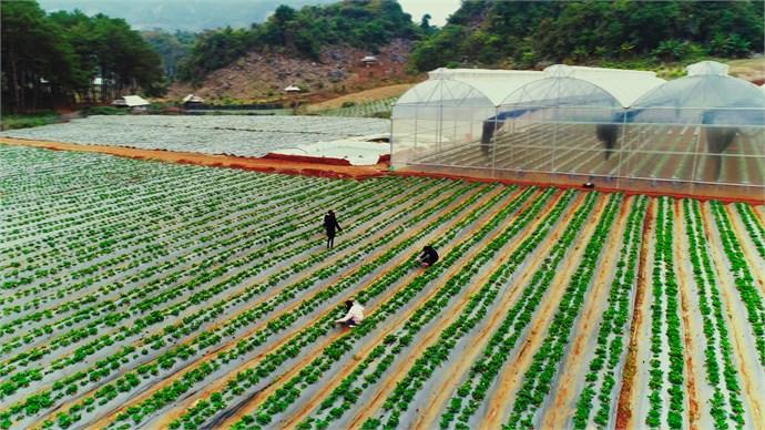 hình ảnh từ góc vườn tại trang trại dâu tây Chimi Far