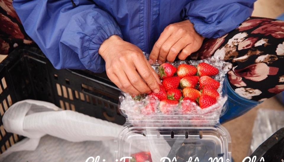 Mua dâu tây ở đâu giá gốc và đảm bảo chất lượng tại Hà Nội
