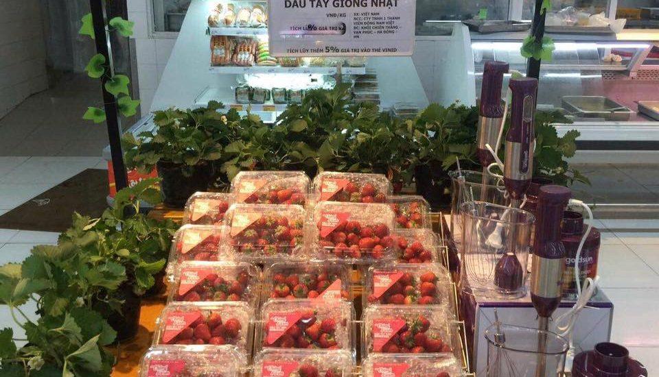 Dâu tây Chimi Farm có mặt trong hệ thống siêu thị của Vinmart