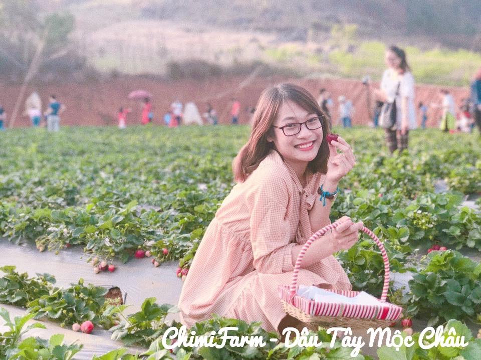 Hái dâu tây Mộc Châu tại Chimi Farm