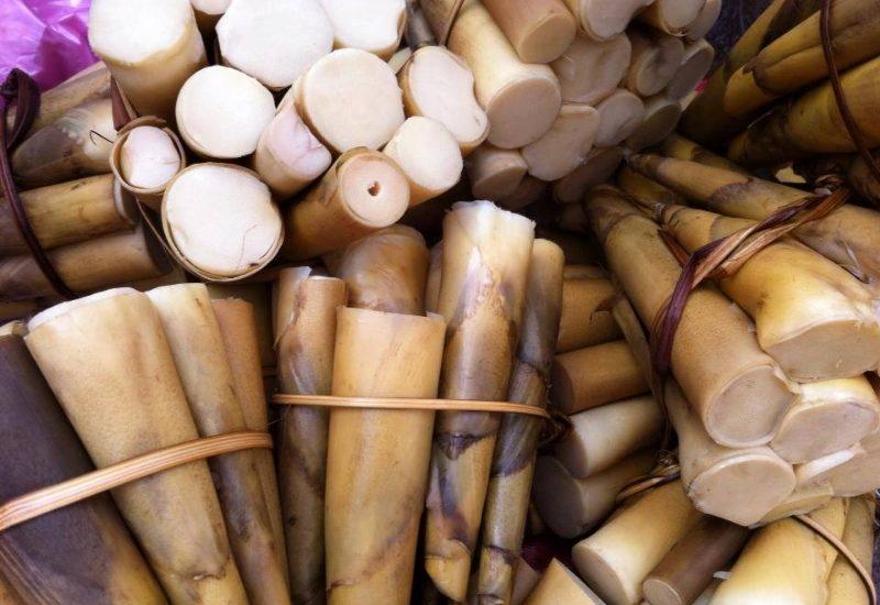 Măng rừng là đặc sản của Mộc Châu