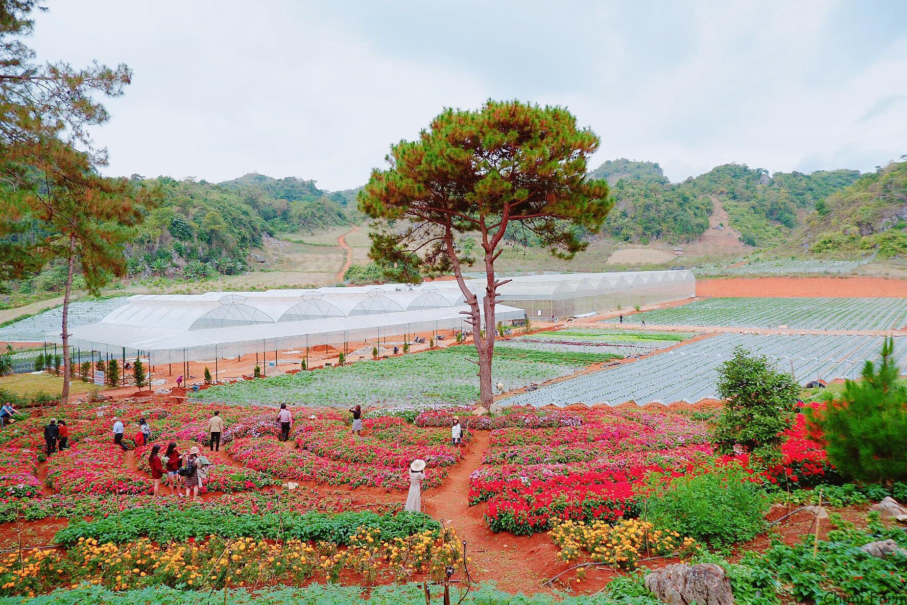 Cảnh quan của trang trại dâu tây Chimi có sức hút với du khách