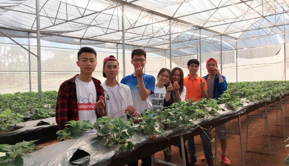 Hệ thống trồng dâu tây công nghệ cao trong nhà kính
