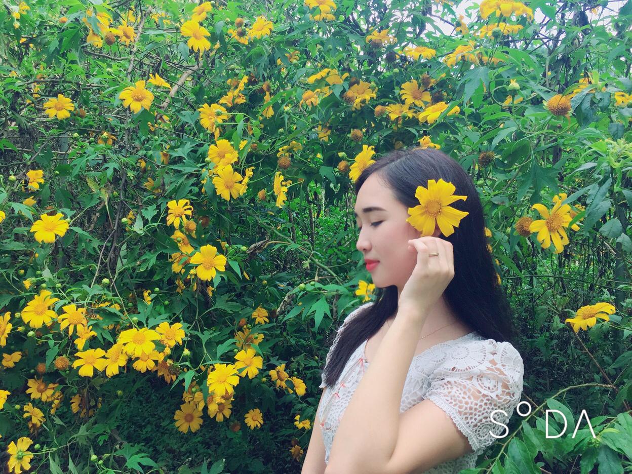 Hoa dã quỳ nở rực vào mùa thu