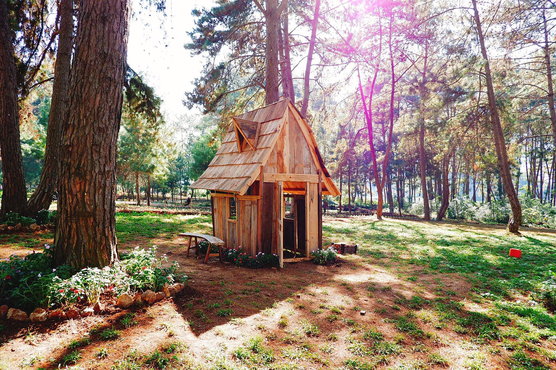 Ngôi nhà gỗ cổ tích giữa rừng thông của Chimi Farm