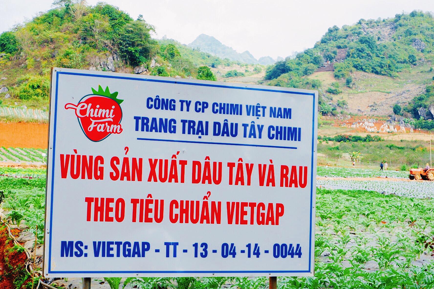 Trang trại dâu tây Chimi sản xuất theo tiêu chuẩn VietGAP