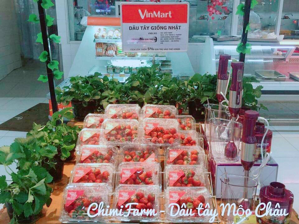 Dâu tây Chimi Farm được bày bán tại chuỗi siêu thị Vinmart