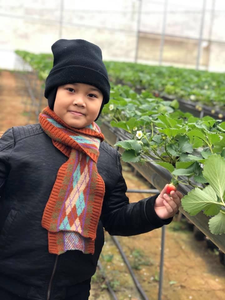 Các gia đình có thể đưa các em bé đi trải nghiệm tại Chimi Farm