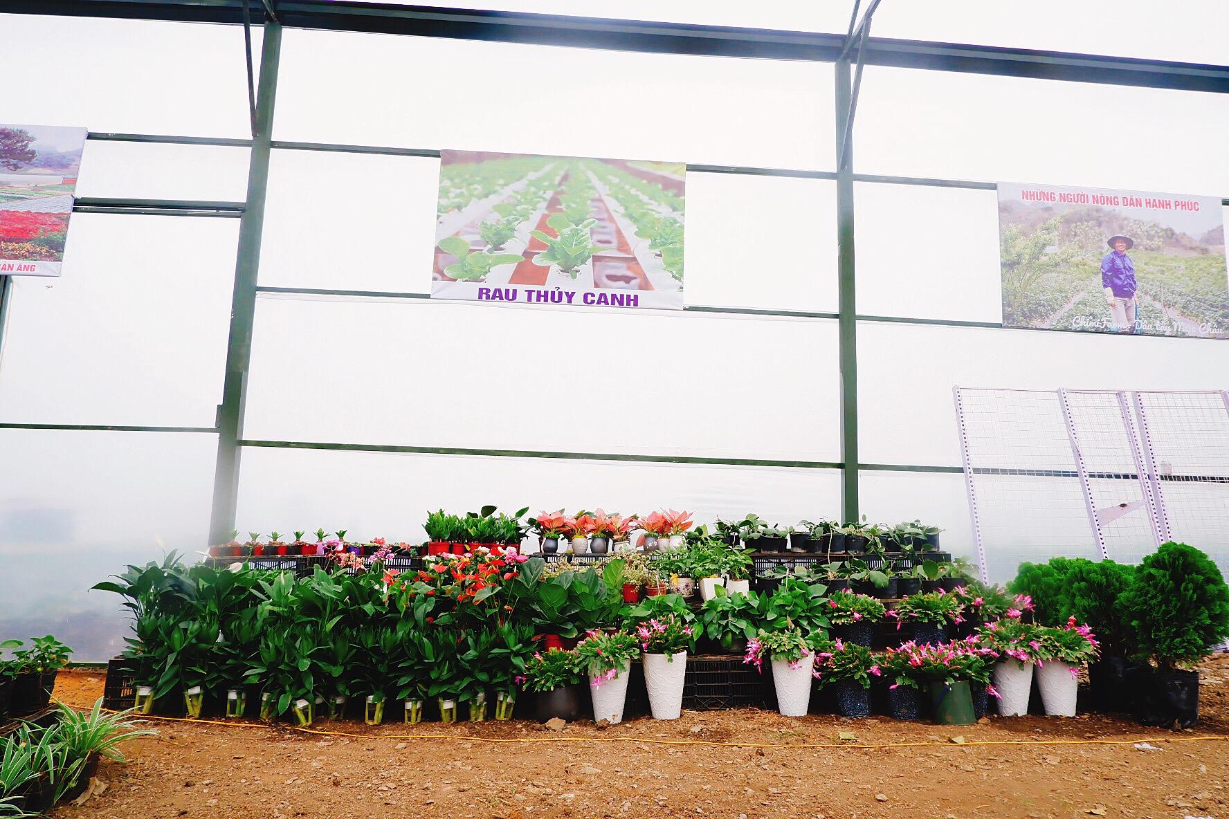Khu vực bán hoa cảnh của cơ sở 2