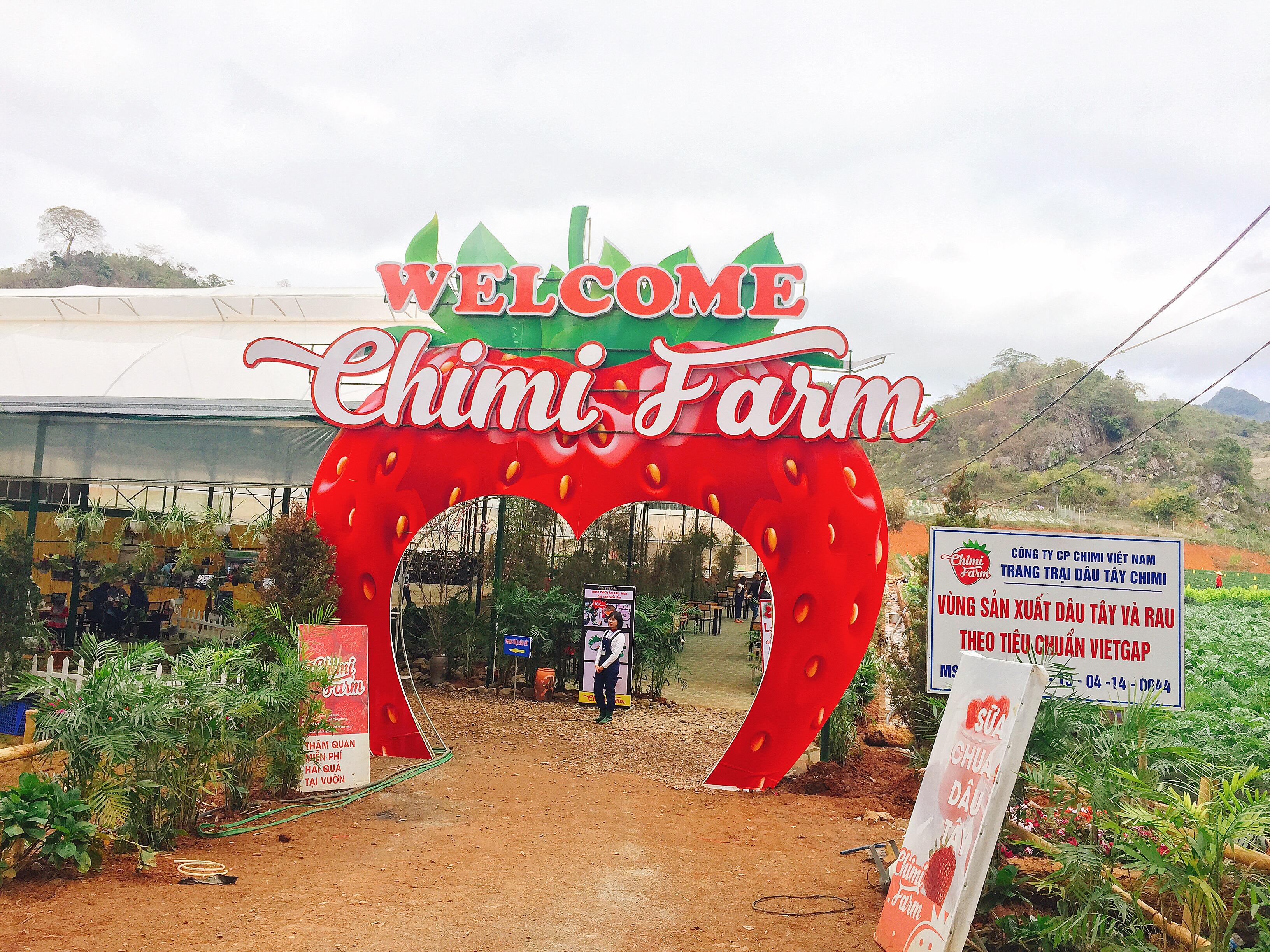 Trang trại dâu tây Chimi miễn phí vào tham quan và trải nghiệm
