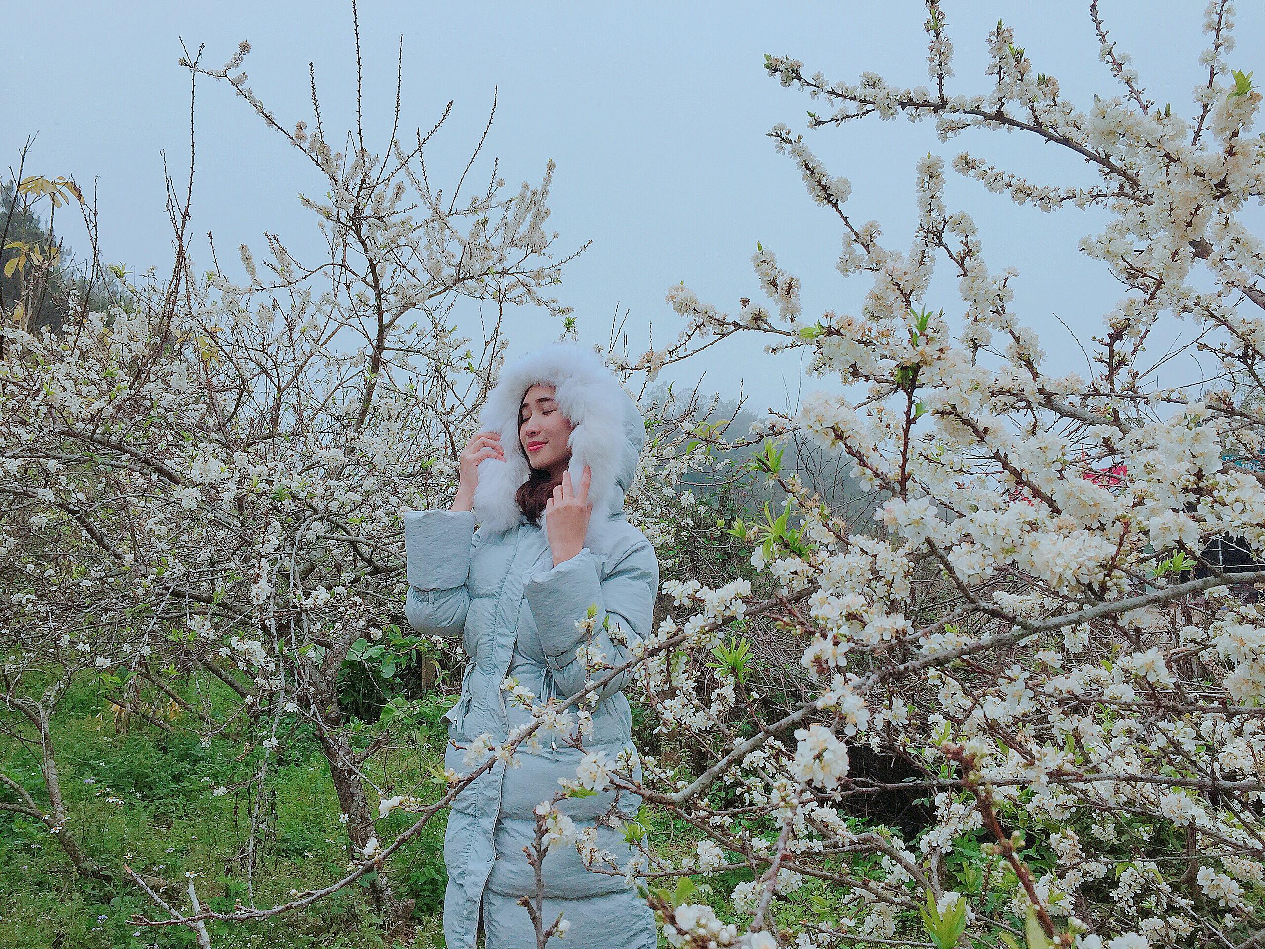 Hoa mận nở trắng núi rừng