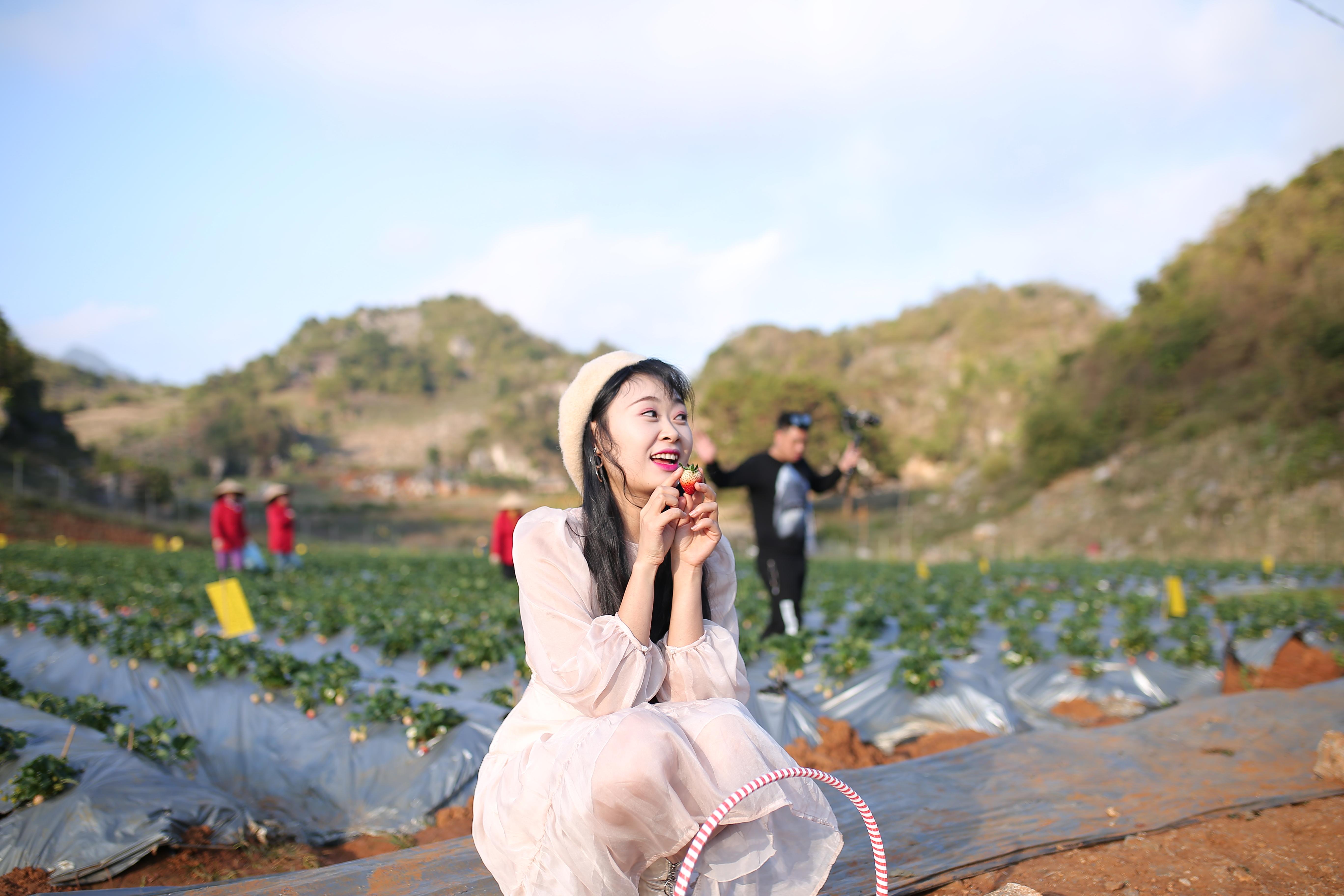 Vườn dâu tây ngoài trời của Chimi Farm 1