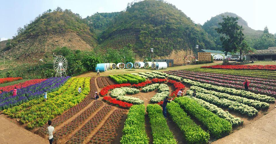Happy land là thiên đường hoa của Mộc Châu