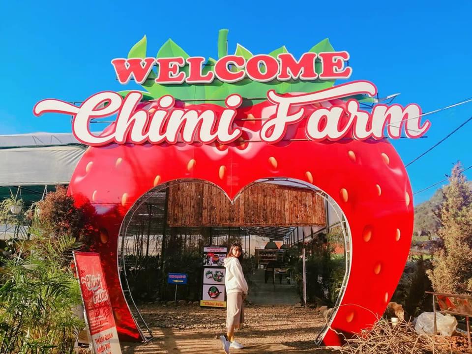 Chimi Farm là trang trại dâu tây lớn nhất miền Bắc