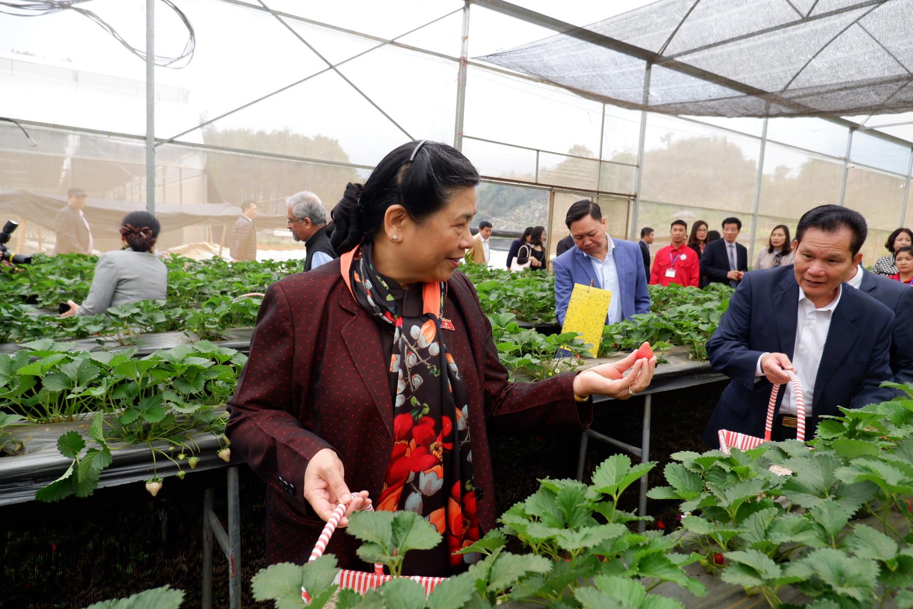 Đoàn đại biểu quốc hội đến thăm Chimi Farm