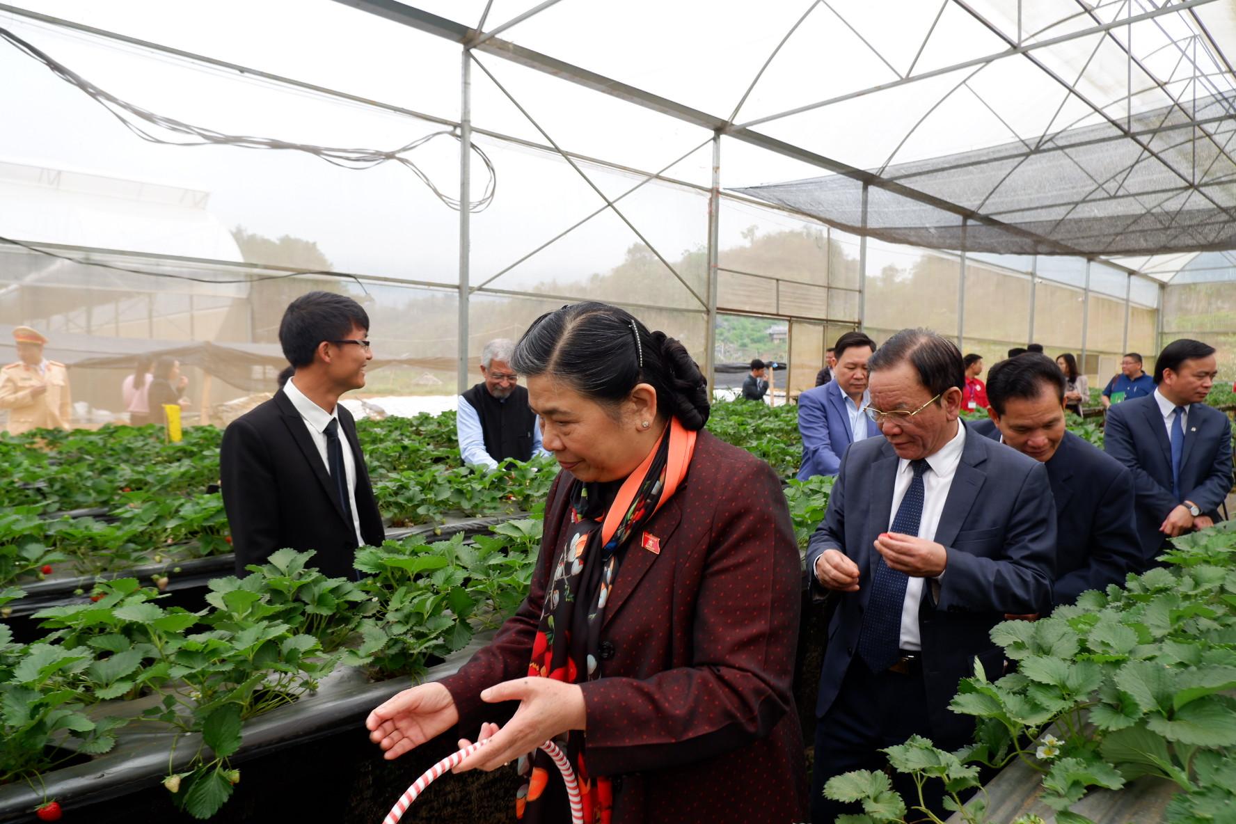 Đ/c Phó Chủ tịch Quốc hội chia sẻ đây là lần đầu tiên được trải nghiệm hái dâu tây tại vườn