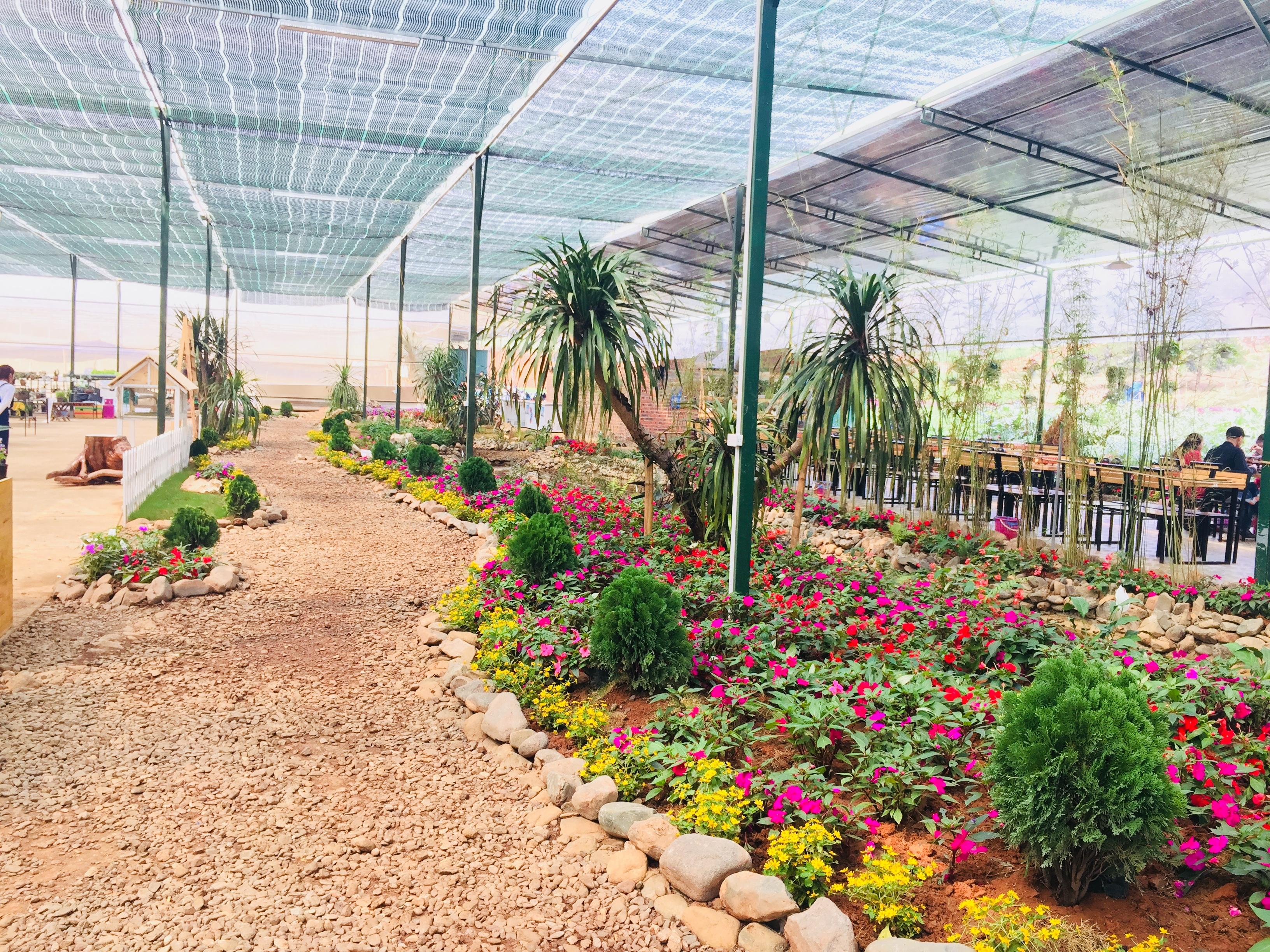 Chimi Farm với cảnh đẹp với con đường trải đầy hoa