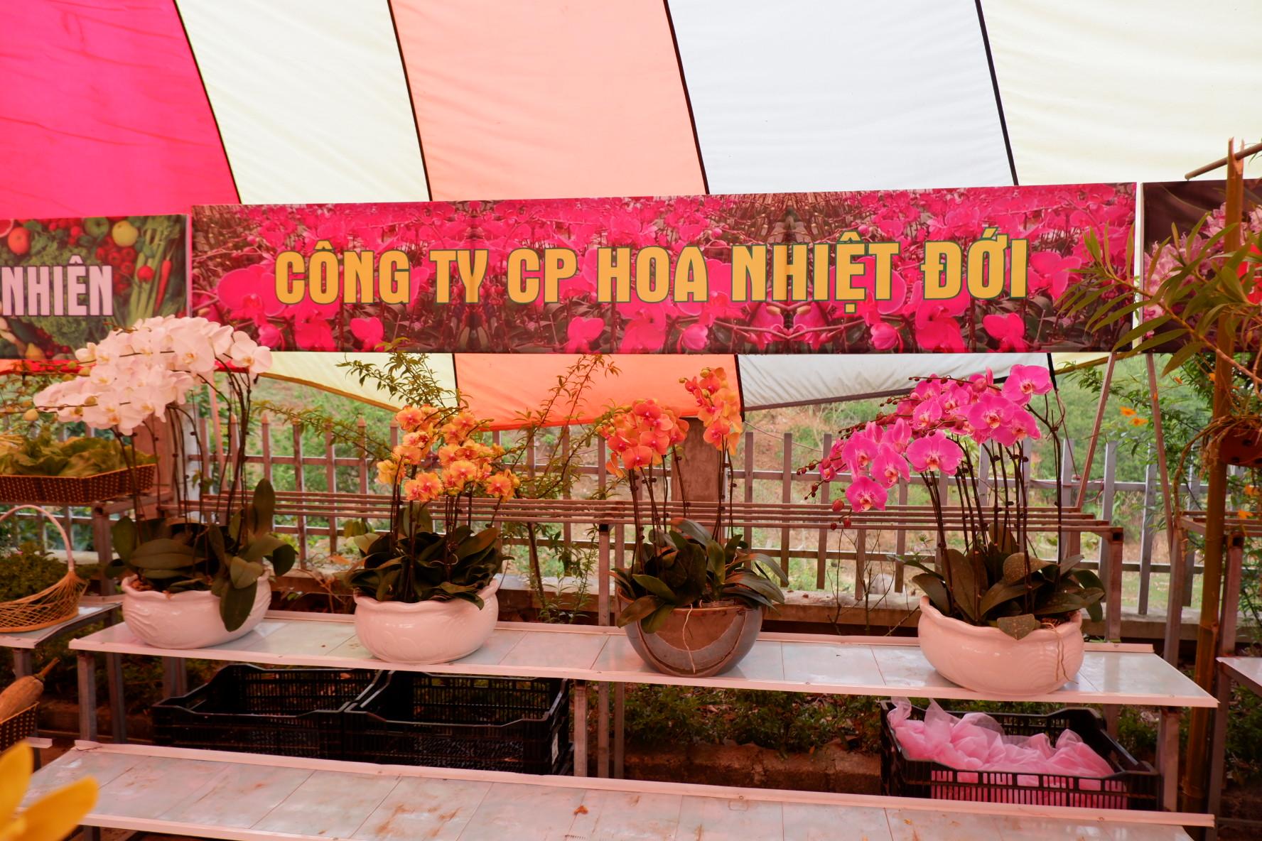 Quầy trưng bày hoa lan cảnh của công ty Hoa nhiệt đới