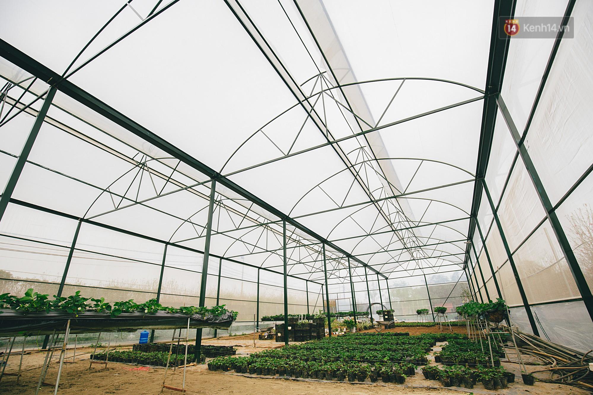 Chimi Farm 3 với diện tích 4000m2 và sẽ mở rộng lên 1 ha trong thời gian tới
