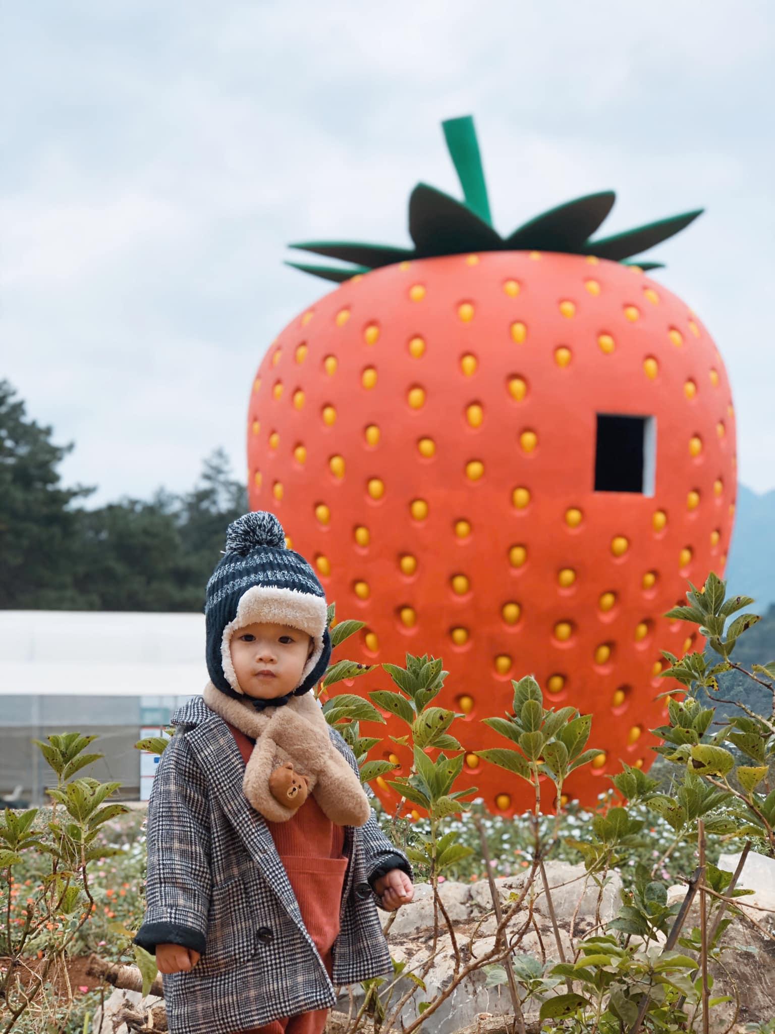 Một trái dâu tây siêu to khổng lồ của Chimi Farm 1