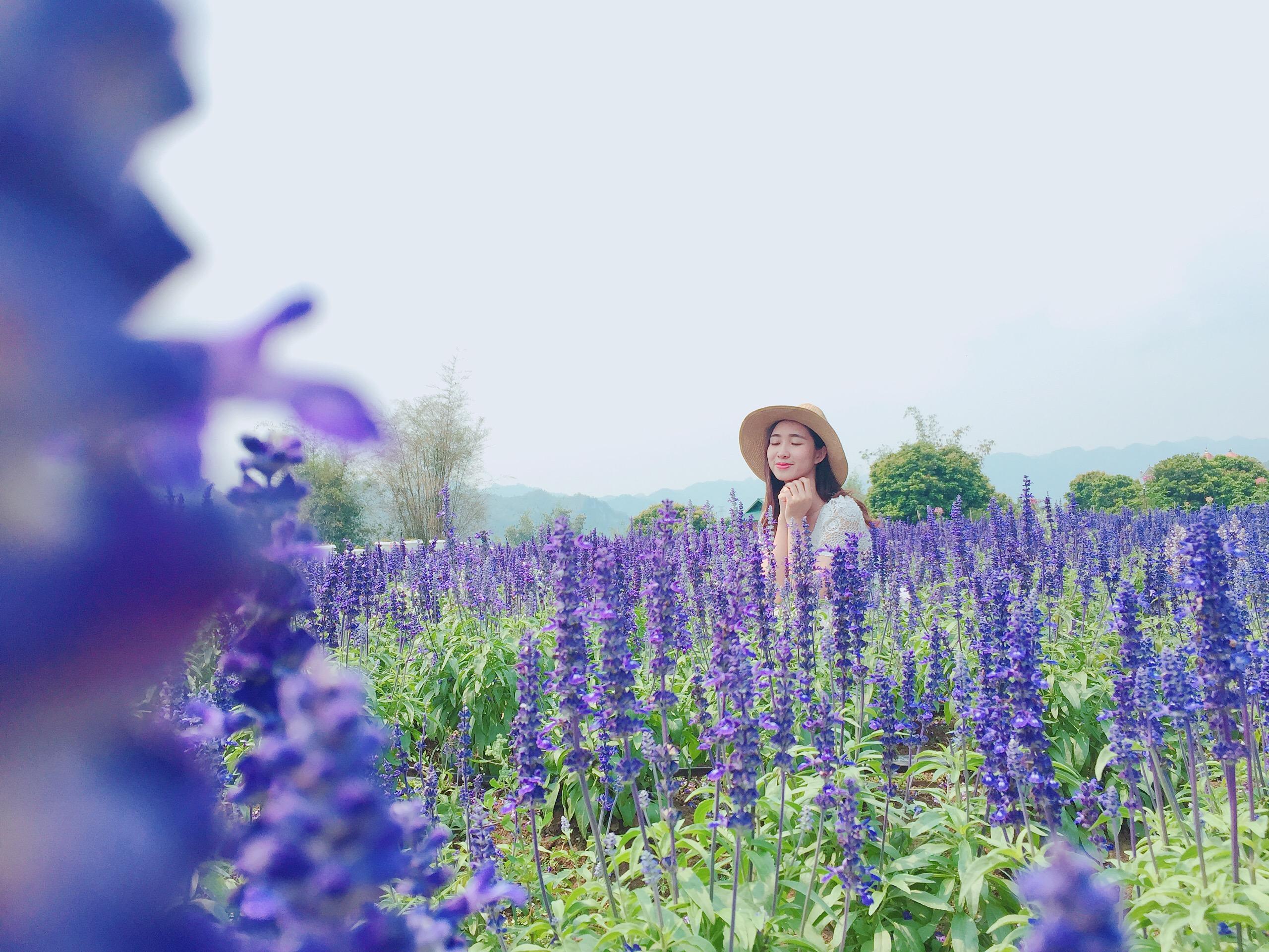 Hoa xác pháo xanh tại Thiên đường hoa