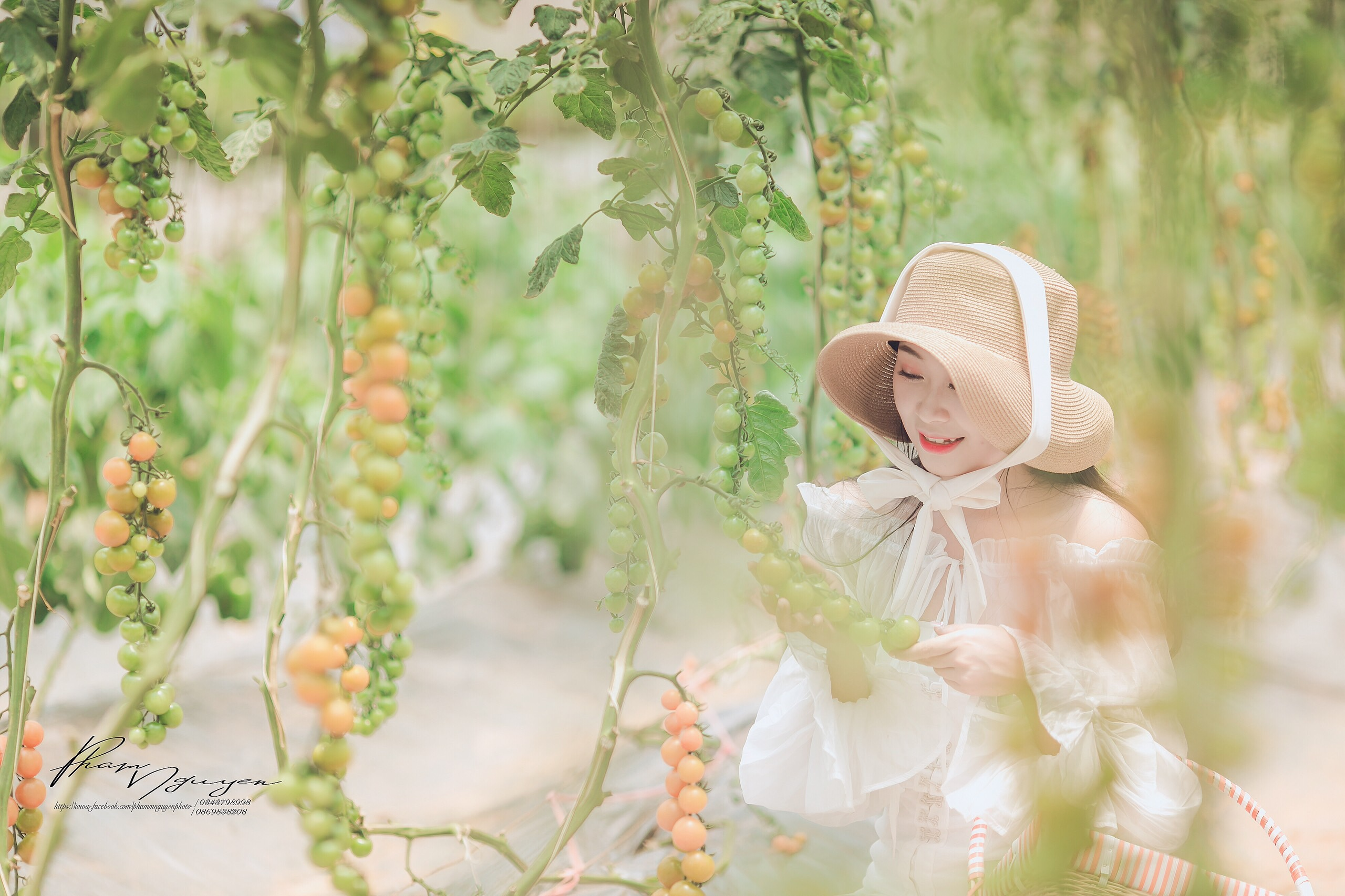Mách nhỏ cách trồng cà chua cherry sai trĩu quả của Chimi Farm