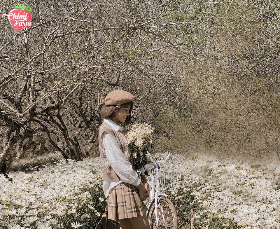 Vườn cúc họa mi Mộc Châu đang là điểm check-in cực hot