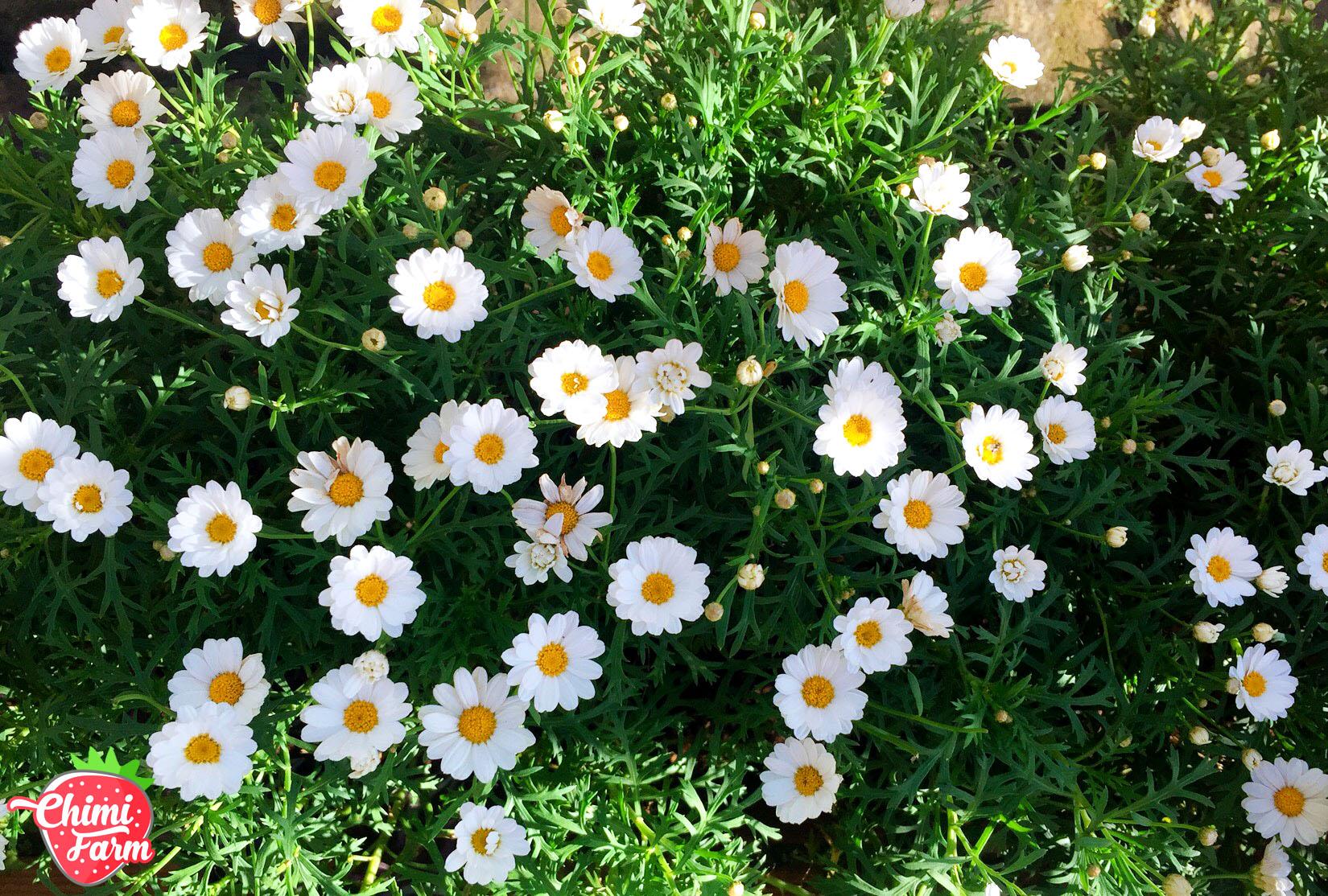 Tháng 11 là mùa của loài hoa báo đông về