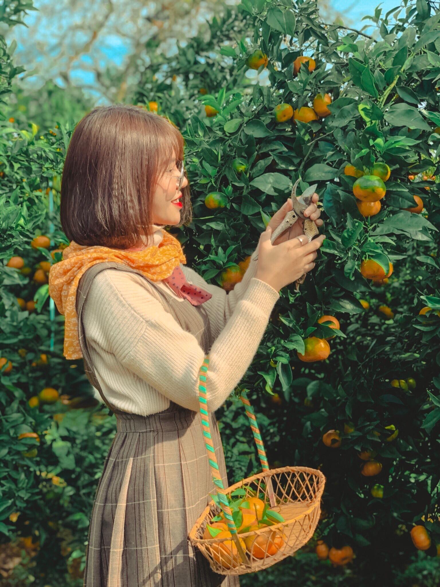Hóa thân thành cô nông dân đang thu hoạch quả