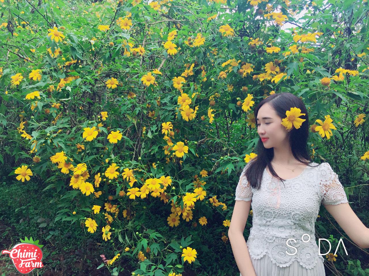 Hoa dã quỳ vàng rực giúp xua tan giá lạnh những ngày mùa đông