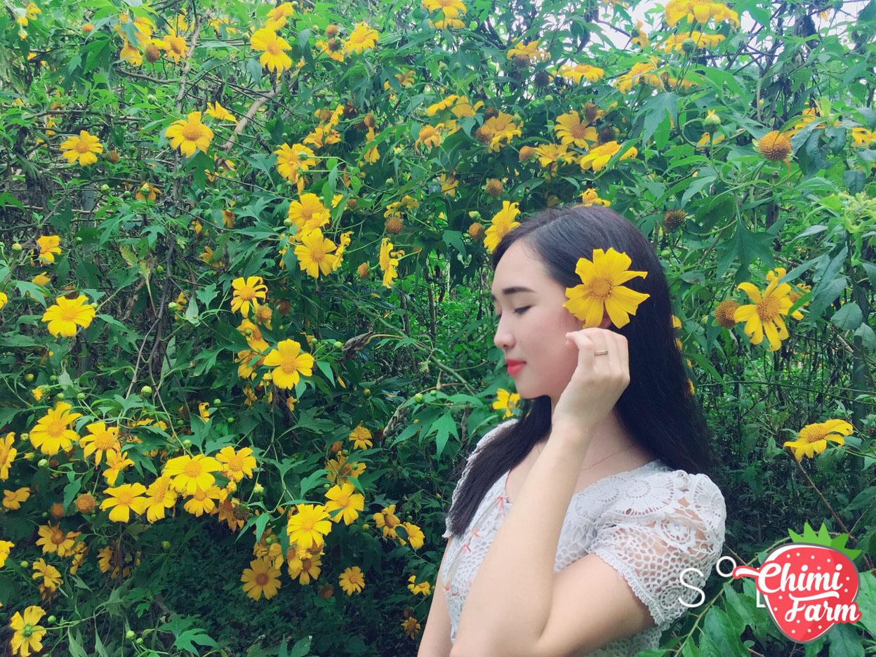 Hoa dã quỳ Mộc Châu được ví như cô nàng sơn nữ của núi rừng
