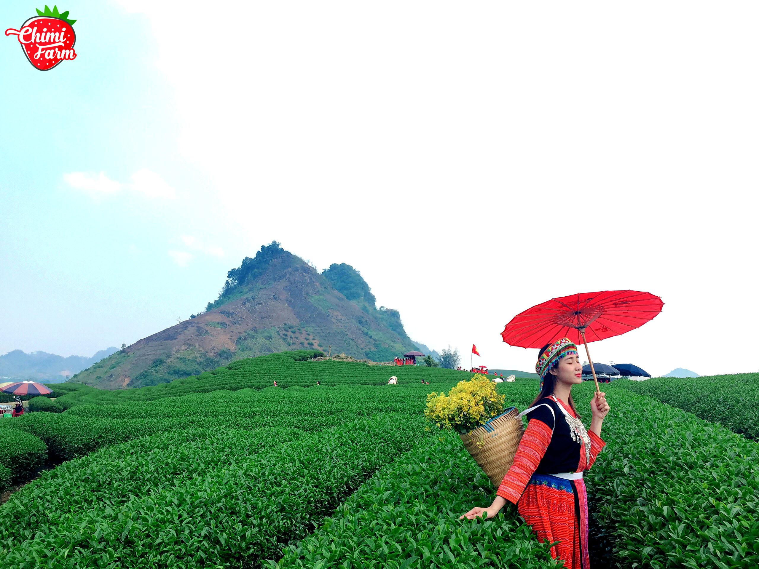 Những đồi chè Mộc Châu nổi tiếng đẹp và xanh ngút tầm mắt