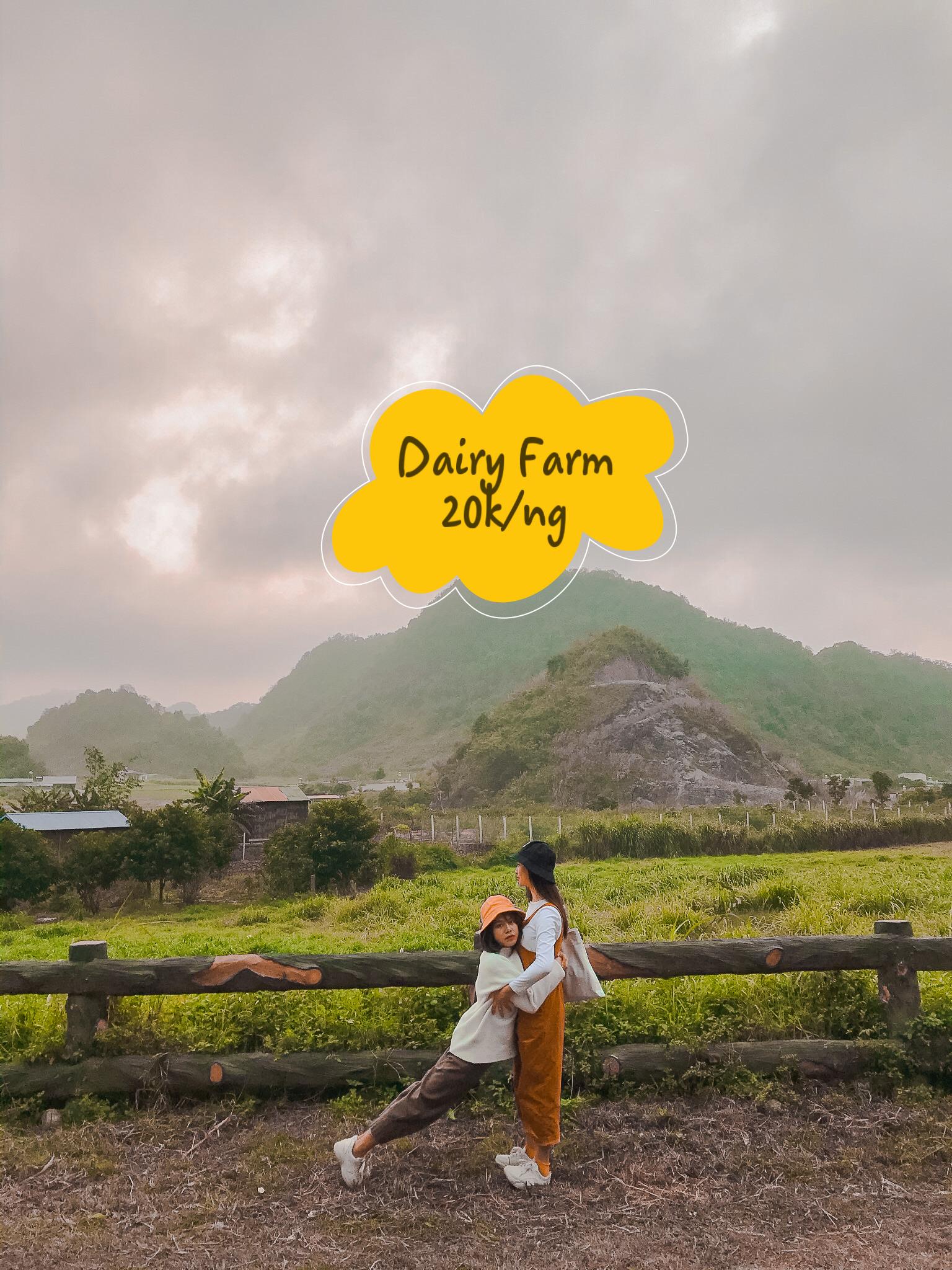 """Bộ ảnh """"Chị ngã em nâng"""" tại Trang trại bò sữa Dairy Farm"""