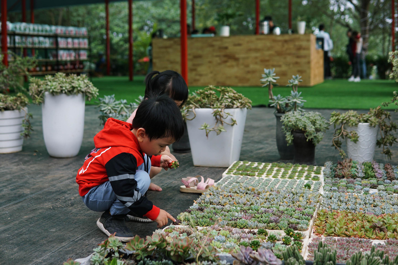 Quầy cây cảnh mini của Chimi Farm