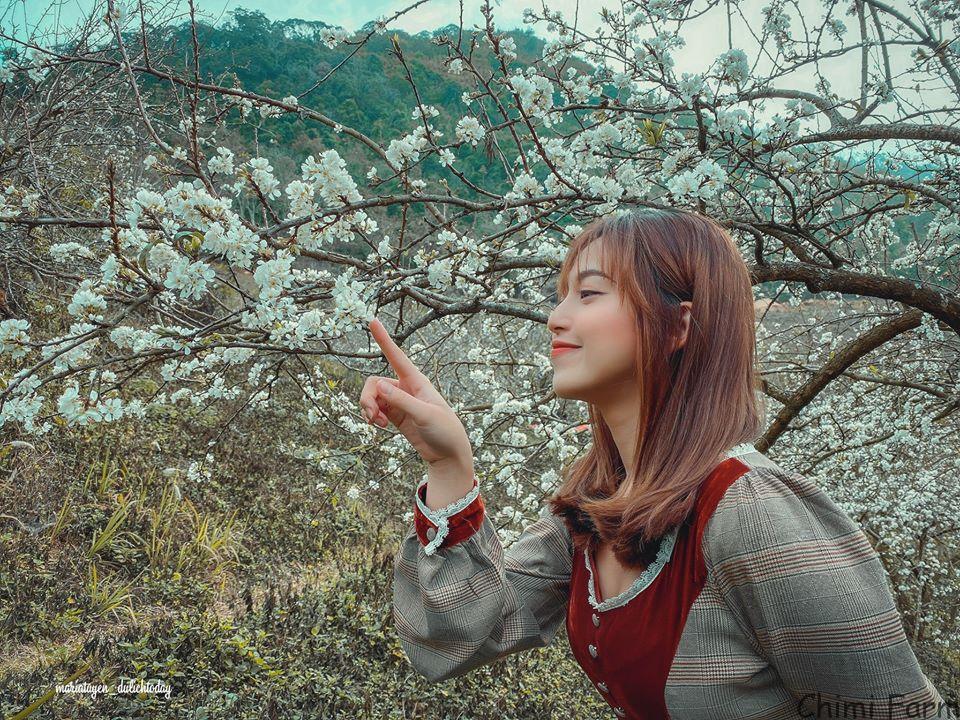 Theo chân cô nàng Maria Tuyền ngắm hoa mận Mộc Châu