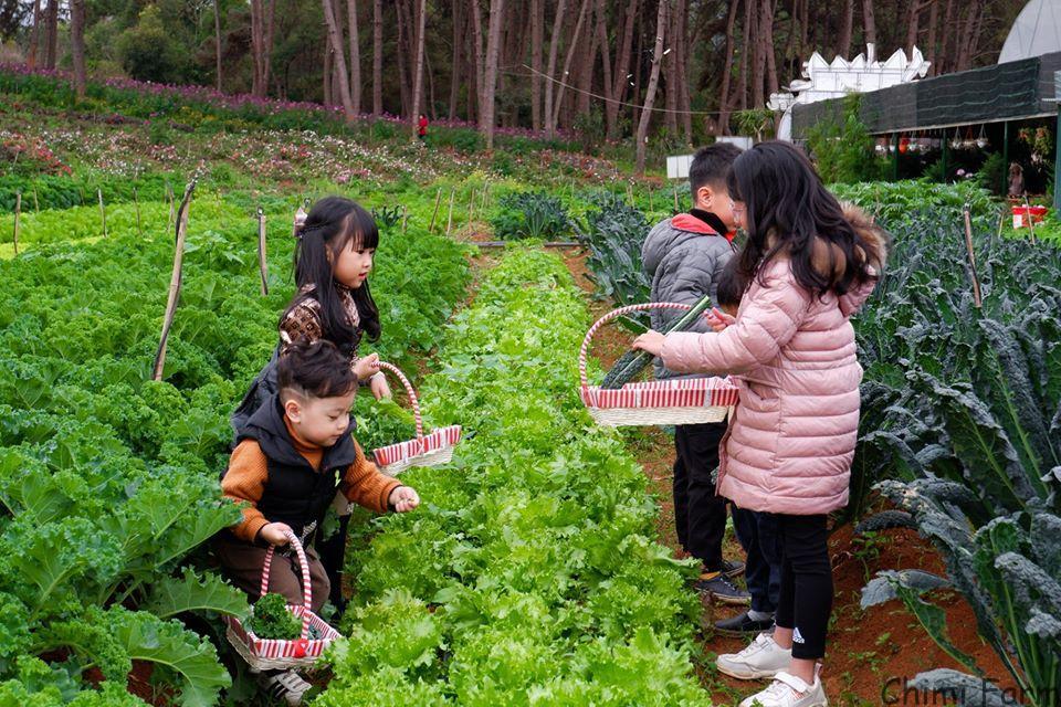 Các gia đình đưa em nhỏ đến thăm quan nông trại vui vẻ