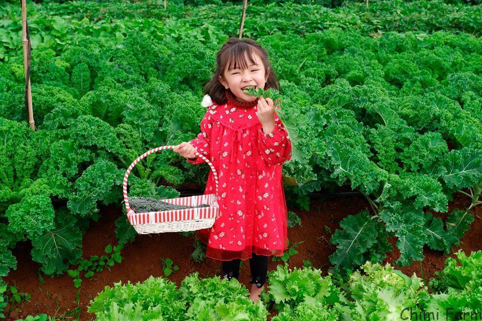Vườn rau Chimi Farm