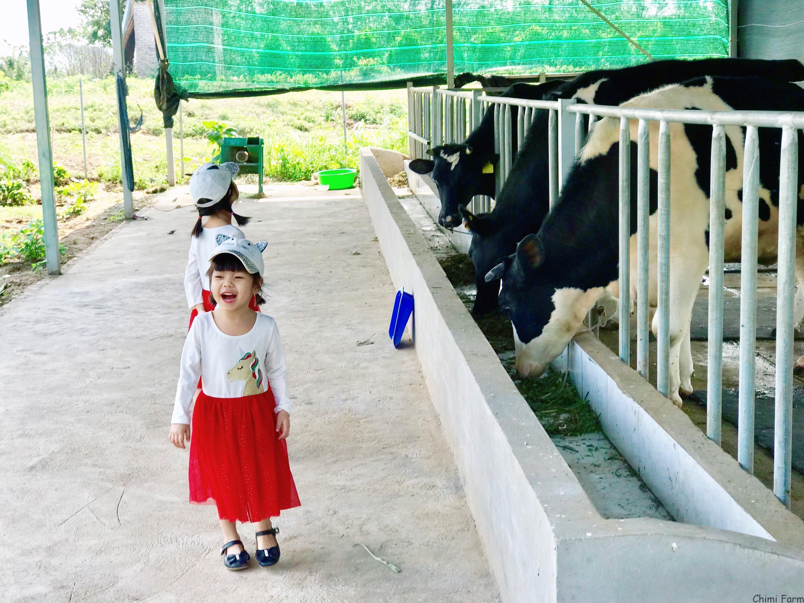 Các bé rất thích thú khi được trải nghiệm cho bò sữa ăn cỏ
