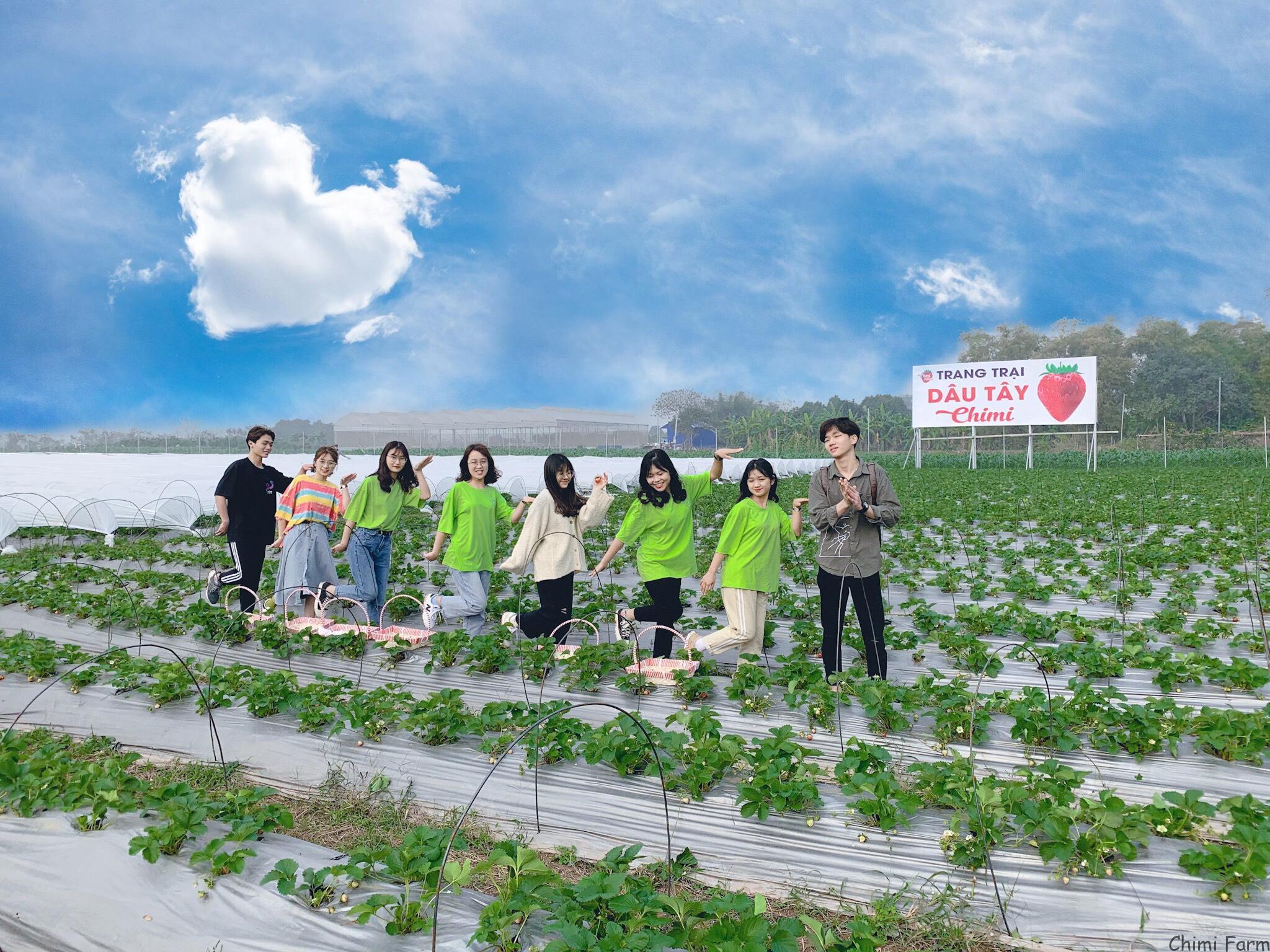 Chimi Farm Nhật Tân - Đông Anh đang thu hút được đông đảo du khách